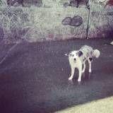 Empresa de Daycare para cães no Ipiranga
