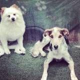Empresa de Daycare para cão  na Saúde