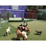 Empresas adestradores para cachorro em São Lourenço da Serra
