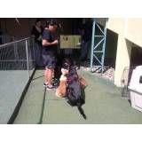 Empresas com adestradores para cachorro no Jardim Paulistano