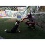 Empresas de adestrador para cachorro em Cajamar