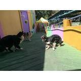 Empresas de adestrador para cachorro em Jandira