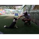 Empresas de adestrador para cachorro no Jardim Paulistano