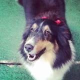 Empresas de adestrador para cachorros em Interlagos