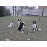 Empresas de adestrador para cão em Raposo Tavares