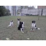 Empresas de adestrador para cão na Saúde