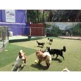 Empresas de adestradores para cachorro em Alphaville