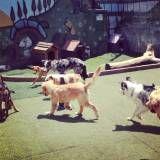 Empresas de adestradores para cachorro no Alto da Lapa