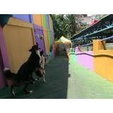 Empresas de adestradores para cães em Itapecerica da Serra