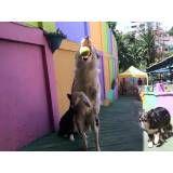 Empresas de adestradores para cão em Alphaville