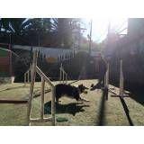 Empresas de adestramento de cachorros no Jardim Bonfiglioli