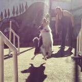 Empresas de adestramento de cão no Jaguaré