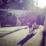 Empresas de adestramento para cachorro no Jardim Bonfiglioli