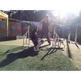 Empresas de adestramento para cão em Barueri