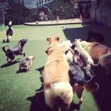 Empresas de Daycare canino em Interlagos