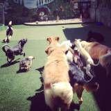 Empresas de Daycare canino no Ibirapuera