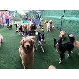 Empresas de Daycare de cachorro no Itaim Bibi