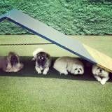 Empresas de Daycare de cão  em Santo Amaro