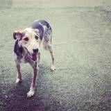 Empresas de Daycare para cachorro no Sacomã