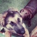 Empresas de Daycare para cães em Embu Guaçú
