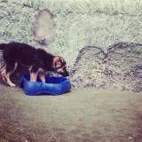 Empresas de Daycare para cão  em São Lourenço da Serra