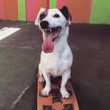 Encontrar adestramento de cachorro no Butantã