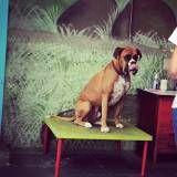 Encontrar adestramento de cachorros na Pedreira