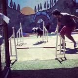 Encontrar adestramento de cães no Jardim Bonfiglioli