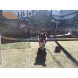 Encontrar adestramento de cão na Vila Leopoldina