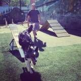 Encontrar adestramento para cachorro no Aeroporto