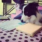 Encontrar adestramento para cachorros no Butantã