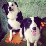 Encontrar adestramento para cães no Jardins