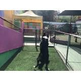 Encontrar adestramento para cão em Santana de Parnaíba