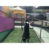 Encontrar adestramento para cão no Itaim Bibi