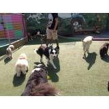 Encontrar hoteizinhos de cão em Sumaré