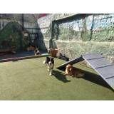 Encontrar hoteizinhos para cão em Pinheiros