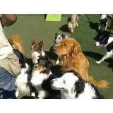 Fazer adestramento de cachorrinho em Taboão da Serra