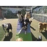 Fazer adestramento de cachorrinho no Jardim América