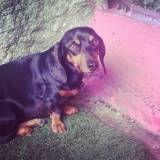 Hora da brincadeira cães em Cotia
