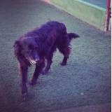 Hora do lazer de cachorros em Raposo Tavares
