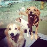 Hora do lazer de cão em Cajamar