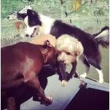 Hora do lazer para cão em Moema