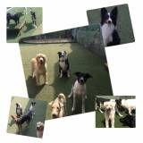 Hospedagem animais em Taboão da Serra