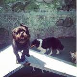 Hospedagem cachorro no Butantã