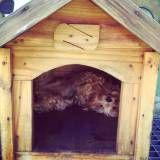Hospedagem para animais no Morumbi