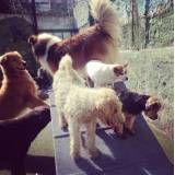 Hospedagem para animal  em Barueri