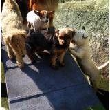 Hospedagem para animal  no Sacomã
