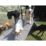 Hospedagem para cachorro de médio porte no Campo Limpo