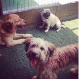 Hospedagem para cachorro pequeno no Ibirapuera