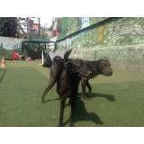 Hospedagem para dog em Raposo Tavares